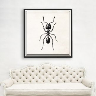 Ant Wall Art, Large Ant Insect