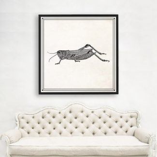 Cricket Wall Art, Large Insect Wall