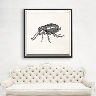 Flea Wall Art, Large Insect Wall