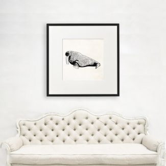 Walrus Wall Art, Large Walrus Wall